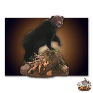 miscellaneous animal taxidermy in Michigan