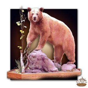 Taxidermy North American Animals 6