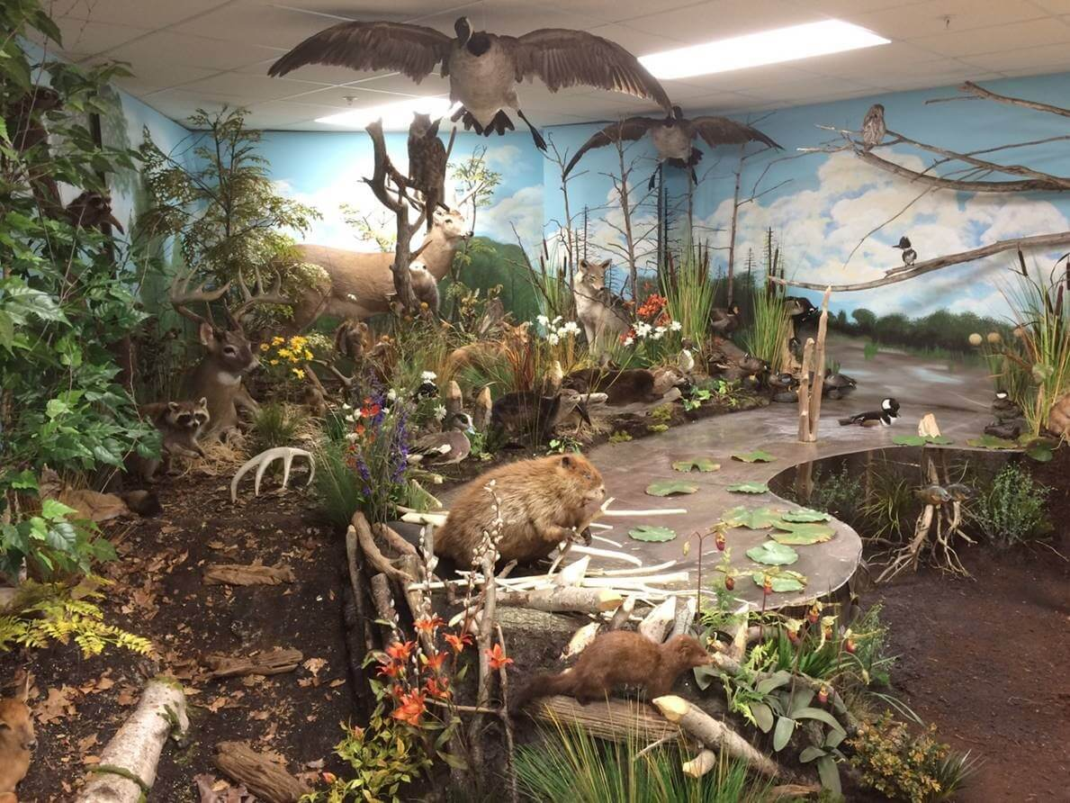 Taxidermy trophy rooms taxidermy by dourlain for Trophy room design