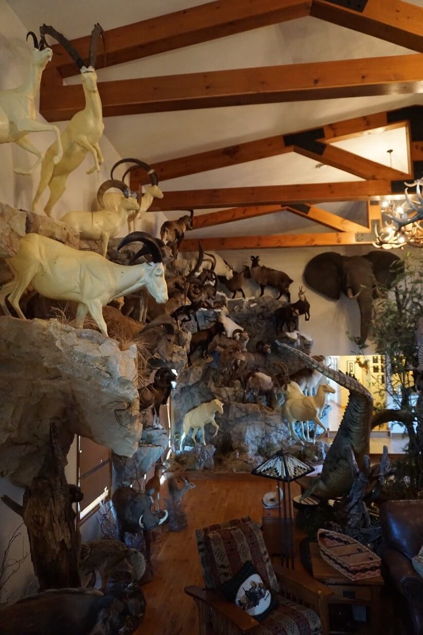 Taxidermy Trophy Rooms Taxidermy By Dourlain
