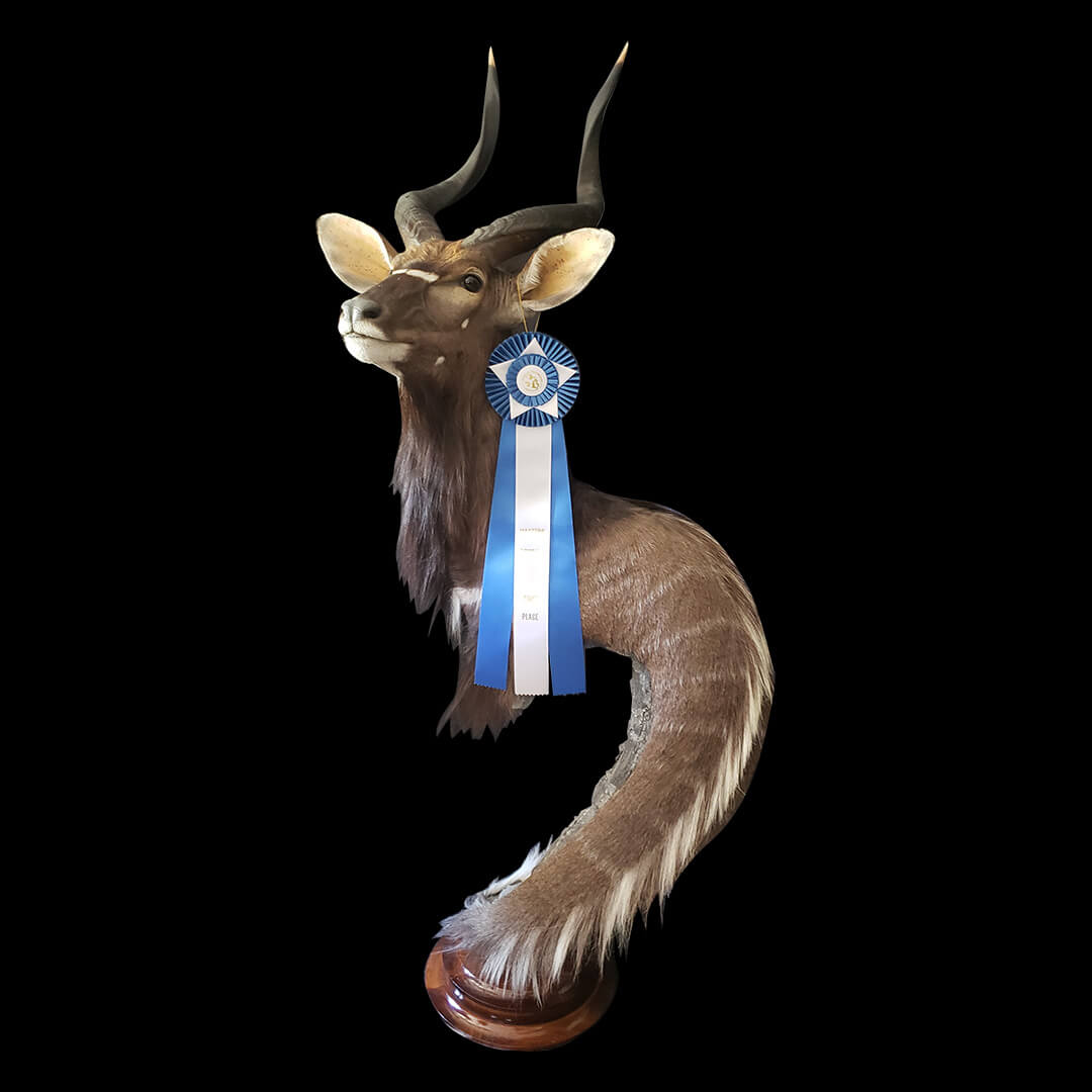 1st Place from the Michigan Taxidermist Association, Masters Division, Champion Award/Ribbon